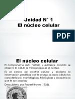 05 El núcleo celular (1).ppt