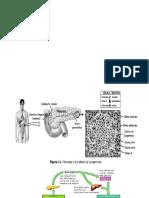 REGLULACION DE GLICEMIA, TEMPERATURA Y ORINA.pptx