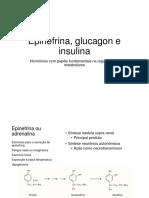 Insulina e Glucagon Ciclo Alimentado e Jejum Alunos