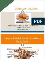Inervación Del Nervio Maxilar & Mandibular