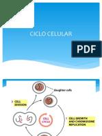 Ciclo Celular