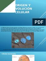 Origen y Evolución Celular