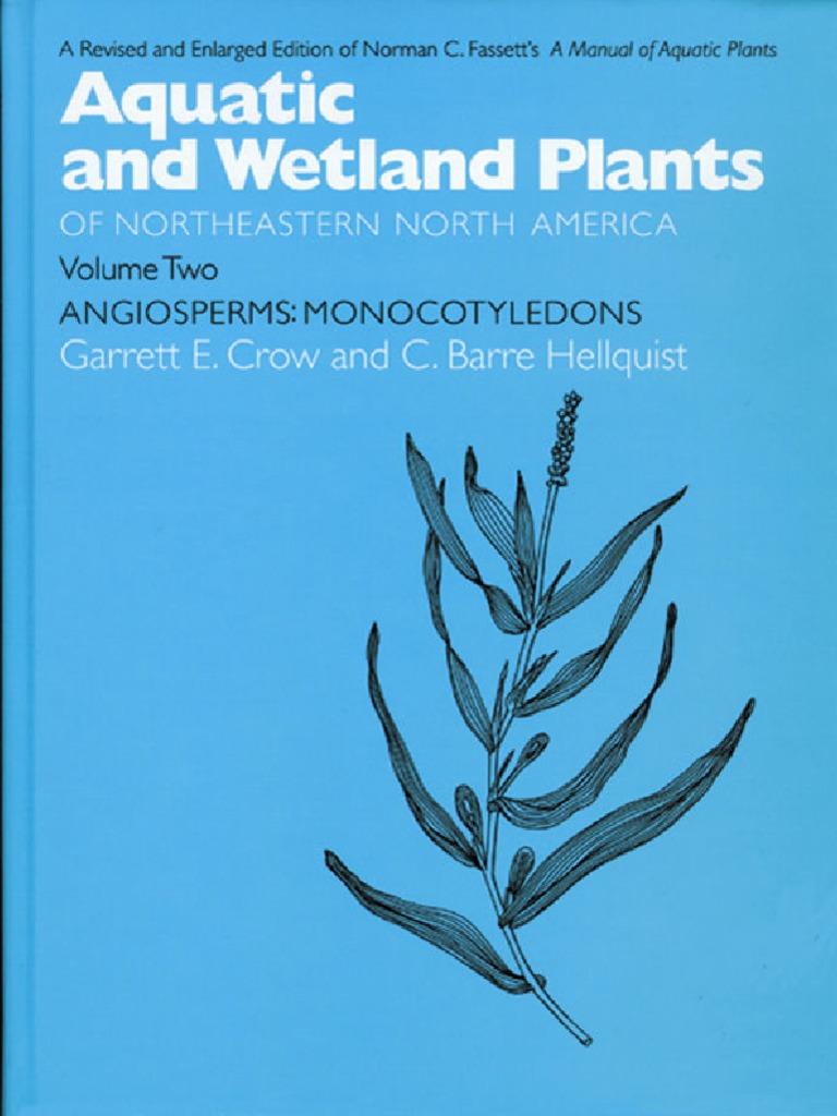 Carex pseudocyperus 100 Aquatic Grass Seed Cyperus Sedge