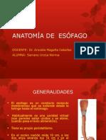 anatomayfisiologiadelesofago-140203105046-phpapp02