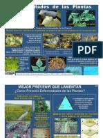 ENFERMEDADES DE LAS PLANTAS.pdf