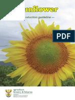 prodGuideSunflower.pdf