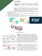 310203504-Transporte-de-Moleculas-de-Elevada-Masa-Molecular.docx