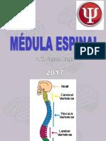 T6-Médula espinalM2