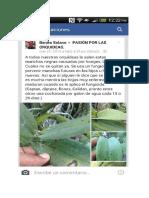 CONSEJOS PASION POR LAS ORQUIDEAS (4).docx