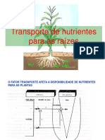 Transporte de Nutrientes Para Raíz