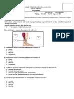 Guía evaluada Cs Naturales 4° Básico