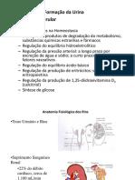 AULA 02 - Formação_da_Urina