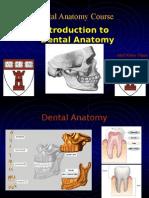Dental Anatomy Introduction