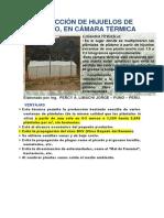 PRODUCCIÓN DE HIJUELOS DE PLÁTANO...CAMARA TERMICA.docx