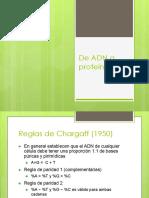 1.1_De ADN a proteinas.pdf