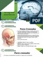 Pares Craneales.pptx.pdf