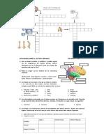 Crucigrama Sobre Los Cuidados Del Sistema Nervioso Cta 2 Sec