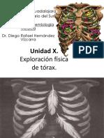 Torax semiologia