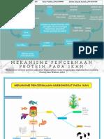 Mind Map Mekanisme Pencernaaan Ikan