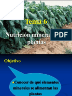 Nutricion_mineral.ppt