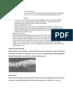 Diaphyseal Healing.docx