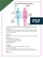 Características Sexuales Primarias y Secundarias