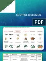 Control Biologico en Citricos