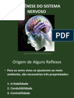 1 Aula Filog Nese Do Sistema Nervoso