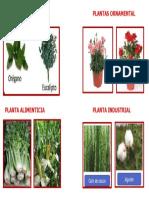 PLANTA MEDICINAL PLANTAS ORNAMENTAL.docx