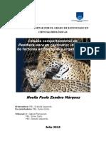 panthera onca.pdf