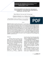 The+number+macrophage.pdf