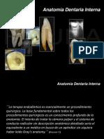 anatomia2014.pdf