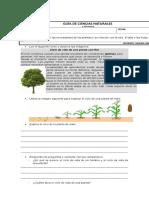 Guía de Ciencias Naturales  las plantas