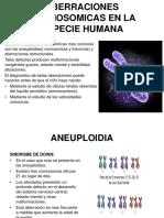 Aberraciones Cromosomicas en La Especie Humana