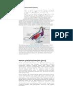 Sistem Pencernaan Burung