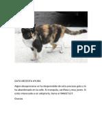 Gato Necesita Ayuda 1