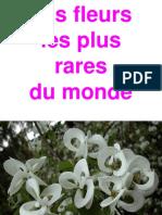 Fleurs Uniques Au Monde