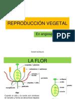 Reproducción Vegetal
