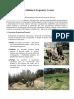 Generalidades de Los Pastos y Forrajes (Autoguardado)