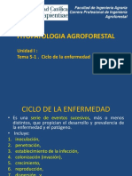 Ciclo de Enfer Fitopatologia AF