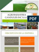 Agroindustria Gandules Final