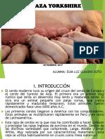 PORCINOS DE RAZA YORKSHIRE.pptx