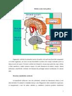 emisferele cerebrale.doc