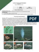 EcoquimisinGUIA.docx
