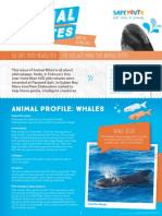 Animal Bites Newsletter #9