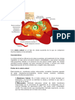 Célula animal.doc