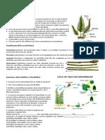 PTERIDÓFITAS.doc