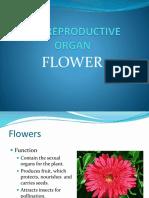 lec8plantflowers-