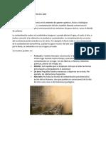 Formas de Contaminacion Del Aire