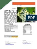 sauvignon blanc ficha tecnica.pdf